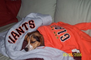 Giants Fan